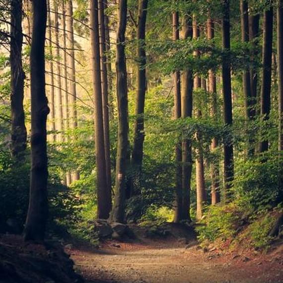 Nature et outdoor