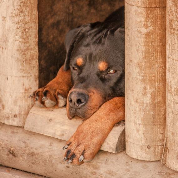 Création d'un chenil pour accueillir les chiens errants