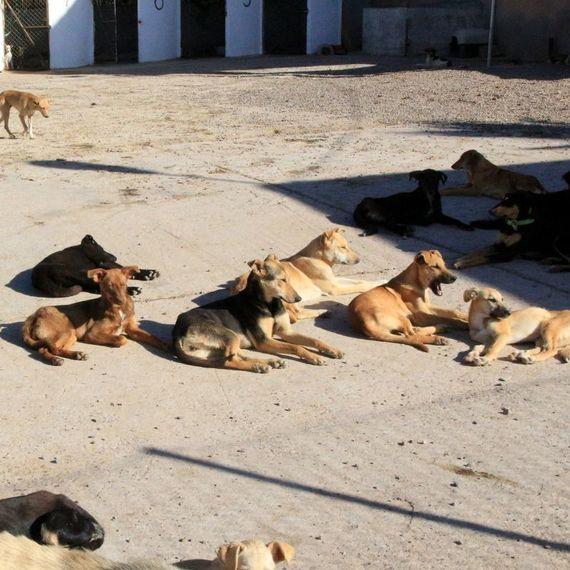 Collier connecté gps pour les chiens errants de Beauvais